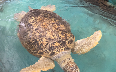 MDTech President Pilots Sea Turtle Rescue Mission